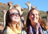 4-Day Garden Route Adventure Tour from Cape Town