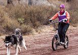 Dog Powered Scooter Jor-ing in Pagosa Springs