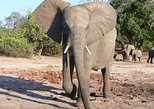 12-Day Delta and Chobe Waterways Accommodated Small Group Safari from Pretoria