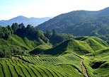 Cameron Highlands Countryside Tour