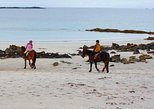 Half-Day Tour: Connemara Wild Atlantic Way Guided Beach Horseback Ride