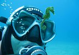 Try Scuba Diving in Split