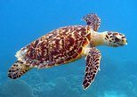 Barbados Turtle Swim and Shipwreck Tour