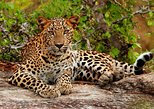 Yala National Park Safari trip from Galle
