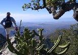 Sierra de la Laguna Biosphere Reserve Hike from Todos Santos