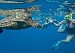 SUP Turtle Town Snorkel