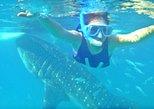 Full Day Whale Shark Experience with Kawasan Falls from Cebu