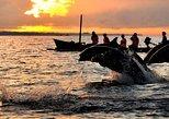 Dolphin Watching, Waterfalls and Ulundanu Temple Tour in Bali