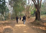 Private Trekking and Local Temple Day Tour in Chiang Rai