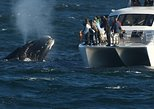 Whale Watching and Hermanus Wine Route: Private Guided Day Tour from Cape Town