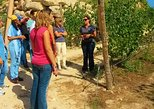Wine Tour and Tasting at Quinta de Santa Cristina Wine Estate
