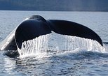 Hoonah Whale-Watching Cruise