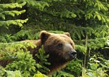 Chichagof Island Tour: Brown Bear Search