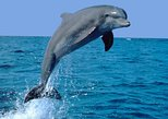 Dolphin Sightseeing Tour on The Footloose Catamaran from Panama City Beach
