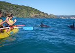 Half-Day Kayak with Dolphins and 4WD Beach Drive from Rainbow Beach