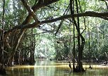Full-Day Little Amazon and Sri Phang Nga National Park from Khao Lak