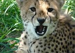 Wildlife Rehabilitation Centre Tour from Hazyview