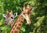 David Sheldrick Elephant Orphanage and Giraffe Center Full-Day Tour from Nairobi