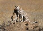 12-Day Kenya and Tanzania Safari Luxury Private Lodge Safari from Nairobi
