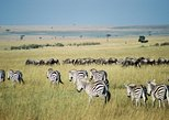 2-Day Maasai Mara Private Safari from Nairobi
