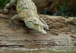 Crocodile River Cruise From Jaco