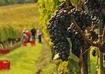 Brunello and Nobile Wine Lovers' Tour: Montalcino and Montepulciano