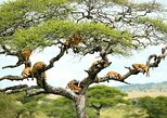 1 Day Lake Manyara safari