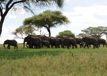 1 Day Tarangire safari
