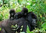 3 Tage Gorilla Trekking nach Bwindi