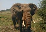5 Day Chalet Kruger Park Safari