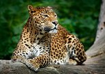 Private Tour: Yala National Park Safari from Galle