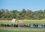 Private Tour: The Great Elephant Gathering Safari in Minneriya