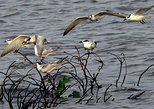 Private Muthurajawela Sanctuary Bird Watching Tour from Colombo or Negombo