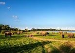 Private Tour: Minneriya National Park Safari