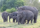 Private Tour: Kaudulla National Park Safari