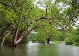 Tamarindo Kayak Estuary Mangrove Tour