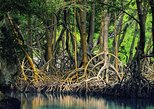 Tamarindo Estuary Boat Safari