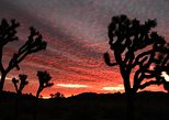 Sunset Joshua Tree Hike with Dinner and Night Sky Presentation