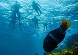Dolphin Cruise, Seal Swim and Reef Snorkel Adventure, Mornington Peninsula