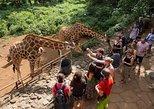 Afrika & Mittlerer Osten - Kenia: Halbtägige David Sheldrick Elefantenwaisenhaus, Giraffenzentrum und Karen Blixen Museumstour von Nairobi aus