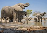 2-Day Amboseli National Park Safari from Nairobi - free airport pick up
