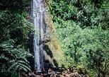 Oahu Waterfall and Rainforest Hike