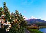 Visita de día completo a Cotopaxi desde Quito, con almuerzo incluido. Quito, ECUADOR