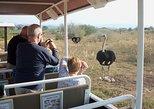Safari Ostrich Farm Tractor Tour in Oudtshoorn