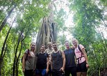 6-Hour Doi Pui Summit Hike in Doi Suthep National Park from Chiang Mai