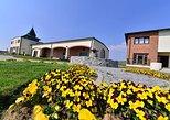 Fruska gora Full Day Wine Tour from Belgrade