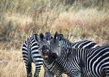 4 Days 3 Nights Safari Mikumi National Park from Zanzibar