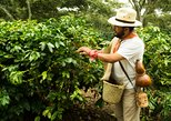 Mexico - Central Mexico: Enjoy the coffee trails in Coatepec Magical Town