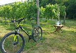 Goriska Brda by bike - day tour