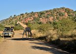 3-Hour Private Game Drive of Pilanesberg National Park